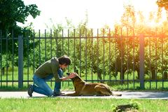 The woman is praising her dog. The dog is obedient and happy Royalty Free Stock Image