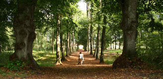 Woman pram forest royalty free stock photos