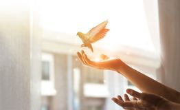 Free Woman Praying And Free The Bird To Nature From Window At Home On Sunset Background, Hope Concept Royalty Free Stock Photo - 154742385