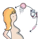 Woman pregnancy with ovum and sperm process to procreation. Vector illustration Stock Image