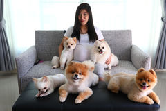 Woman pregnant and pomeranian dog cute pets in living room Stock Photo