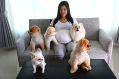 Woman pregnant and pomeranian dog cute pets in living room. Woman pregnant 9 month and pomeranian dog cute pets sitting on sofa furniture in living room, image stock images