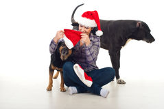 Woman prepare dogs for Christmas stock photos
