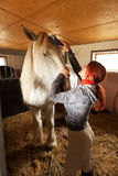 Woman prepare horse for riding. Making braid in stable Royalty Free Stock Image