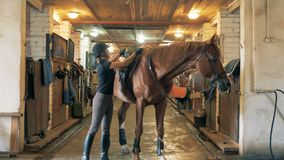 Woman prepares a horse for a ride. An athlete moves a saddle before riding her horse. An athlete moves a saddle before riding her horse stock video footage