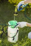 Woman prepares a sprayer for spraying. He pours water from a hose. Green grass in the background. The woman prepares a sprayer for spraying. He pours water from royalty free stock photography