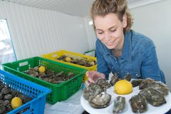 Woman preparing oyster plate to sell. Woman preparing a oyster plate to sell Royalty Free Stock Photos