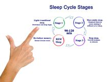 Presenting Sleep Cycle Stages royalty free stock image