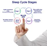 Presenting Sleep Cycle Stages stock image