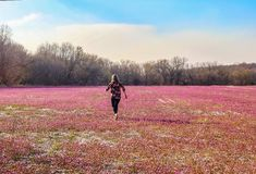 Woman with pretty flowered shirt running across a field of pink and purple flowers in early spring - back to camera royalty free stock photos