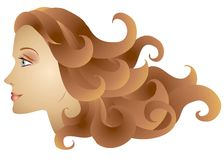 Woman Profile Long Brown Hair. A clip art illustration of a woman - a female model profile with long brown hair flowing outward to the right Stock Image