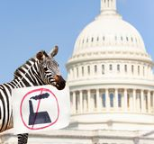Zebra protester holding sign with no plant factory. Woman protest in front of the USA capitol in Washington holding environmental sign saying no to plant or stock images