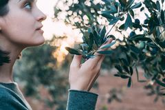 Woman in provence garden with olive trees stock photos