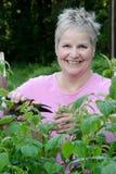 Woman pruning stock photos