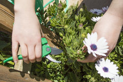 Woman pruning a flower Stock Photo