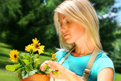 Woman pruning flowers Royalty Free Stock Images