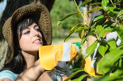 Woman pruning in garden. Woman with straw hat and gloves pruning a plant in a garden in summer Royalty Free Stock Images