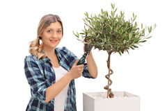 Woman pruning an olive tree Royalty Free Stock Photo