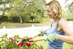 woman pruning plant with garden shears Stock Images