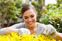 Woman pruning plant royalty free stock photo