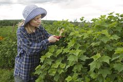 Woman pruning plants Royalty Free Stock Photography