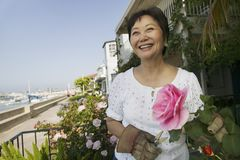 Woman pruning roses outdoors Royalty Free Stock Photos