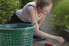 Woman pulling the weeds at the garden royalty free stock images