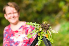 Woman pulling weeds Stock Photos