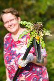 Woman pulling weeds Stock Photo