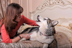 Woman with a puppy Malamute Royalty Free Stock Images