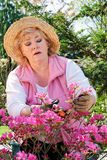 Woman purning shrub Stock Images