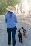 Woman with Purple Hair Walking Goats on Country Road Stock Image