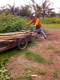 A woman pushing Cart. Stock Photo