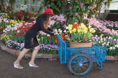 Woman pushing flowers. Woman fun pushing flowers in flowers garden royalty free stock image