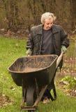 Woman pushing wheelbarrel. Senior woman pushing wheelbarrel while doing lawnwork Royalty Free Stock Image