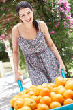 Woman Pushing Wheelbarrow Filled With Oranges Royalty Free Stock Images