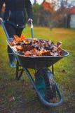 Woman pushing wheelbarrow with leaves Royalty Free Stock Photo