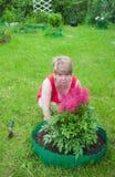 Woman puts flowers astilba Stock Photo