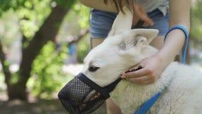 Woman puts a muzzle on a dog