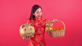 Woman with qipao chinese dress. Holding golden pig and golden bar isolated on red background stock video