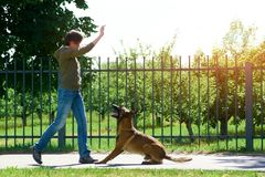 The woman is raising her right hand up to make her dog jump. The dog is about to perform the command Stock Photos
