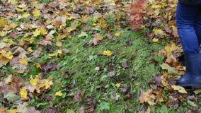 Woman rake colorful autumn maple tree leaf stock video
