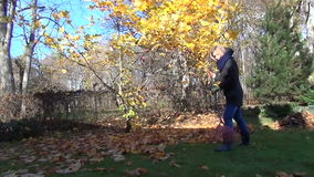 Woman rake golden leaves stock video footage