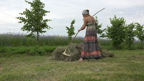 Woman rake hay throughout the day and tired plunk in stook. 4K stock video