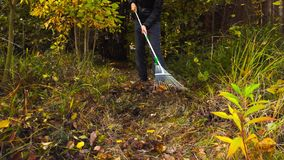 Woman raking autumn fallen leaves in domestic garden stock footage