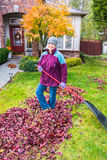 Woman Raking Autumn Leaves Royalty Free Stock Photography