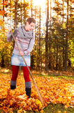 Woman raking vivid yellow autumn leaves Stock Image
