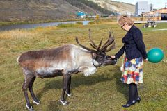 Woman reaches out her hand to deer. Middle-aged woman reaches out her hand to deer stock photos