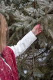 Woman standing next to pine tree holding pine cone in hand in wi Stock Images