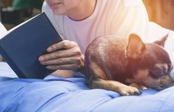 Woman reading a book with sleeping chihuahua dog beside woman. In the bed Royalty Free Stock Images